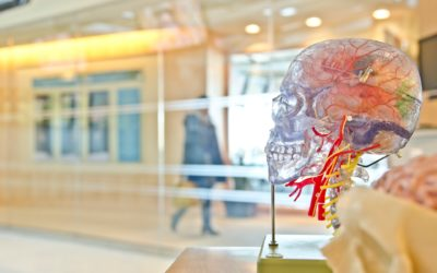 Ways in Which to Help your Brain Function Better